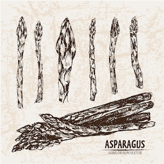 Hand drawn asparagus collection
