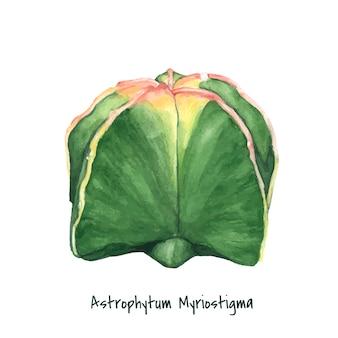 Hand drawn astrophytum myriostigma bishop