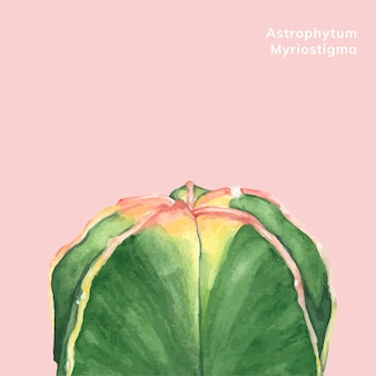 Hand drawn astrophytum myriostigma
