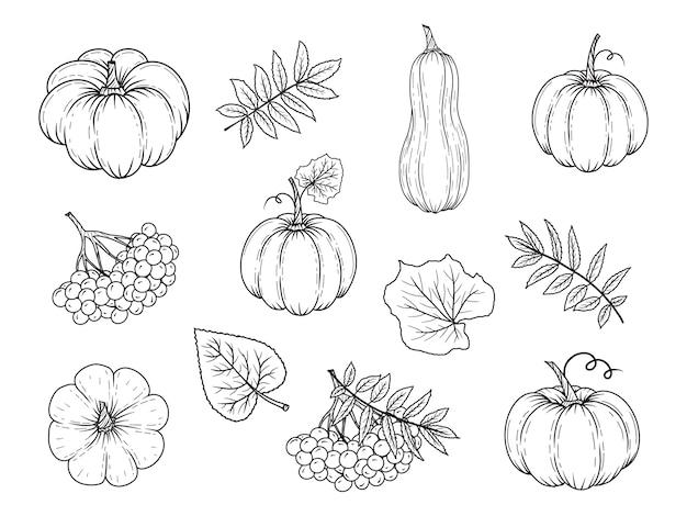 손으로 그린 가을 요소. 호박, 마가목, 잎. 삽화. 검정색과 흰색.