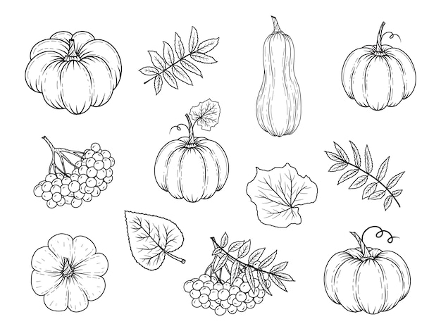 Hand drawn autumn elements. pumpkin, rowan, leaves.  illustration. black and white.