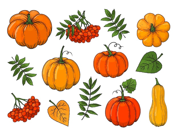 Hand drawn autumn elements. pumpkin, rowan, leaves.  illustration. colorful. isolated on white.