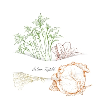 Hand drawn of autumn vegetables, celery and cabbages