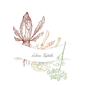 Hand drawn autumn vegetables of chicory, dill and kale