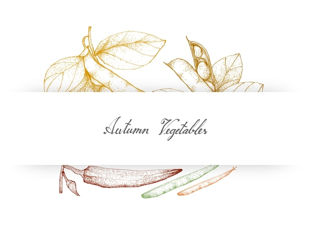 Hand drawn autumn vegetables of fava beans and okra