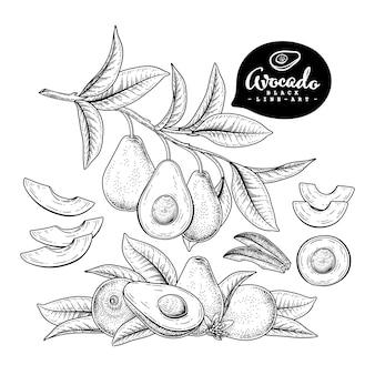 Набор рисованной авокадо, изолированные на белом фоне.
