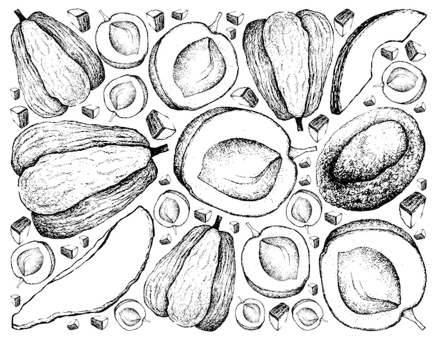 Hand drawn background of apricote and chayote fruits