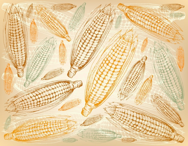 Hand drawn background of autumn sweet corns or maizes