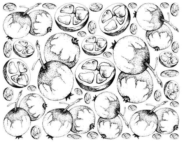 Hand drawn background of baga de macaco fruits