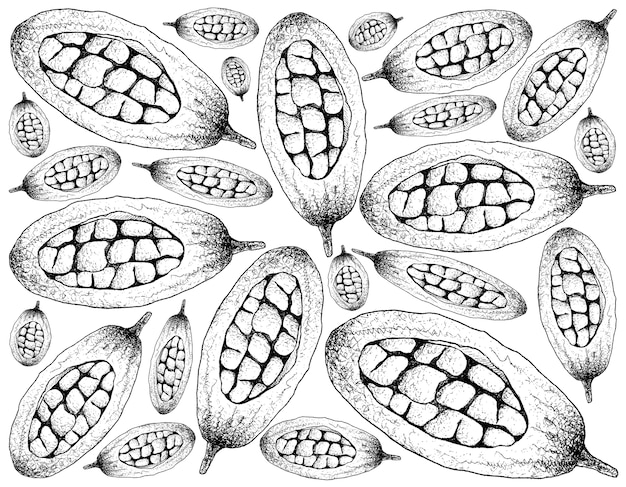 Hand drawn background of baobab or adansonia fruits