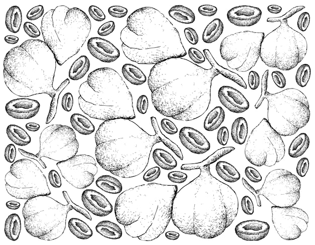 Hand drawn background of beleric myrobalan fruits