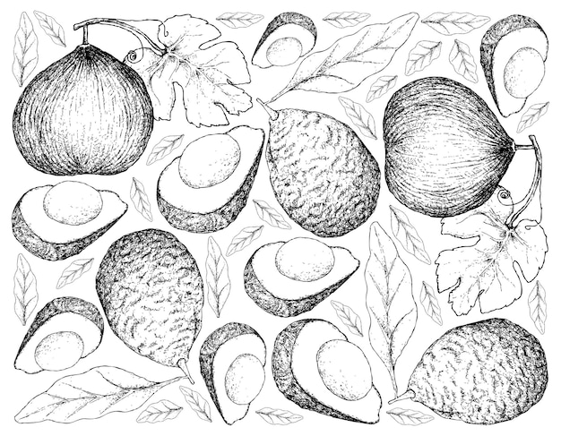 Hand drawn background of casaba melon and avocados