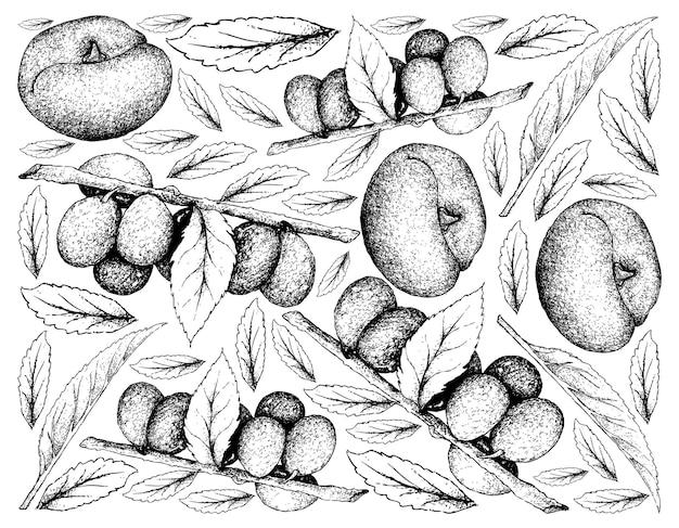 Hand drawn background of damson plum and angel peach