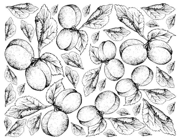 Hand drawn background of european plum fruits
