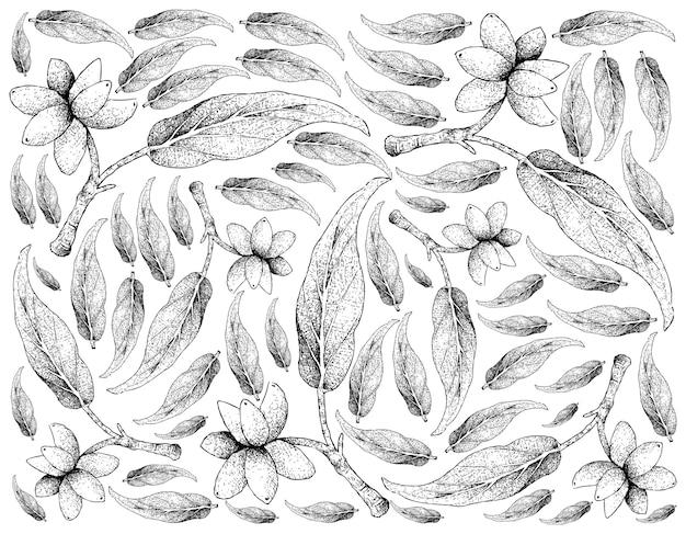 Hand drawn background of fresh aglaonema simplex fruits