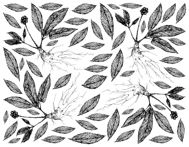 Hand drawn background of ginseng plants with benefit root