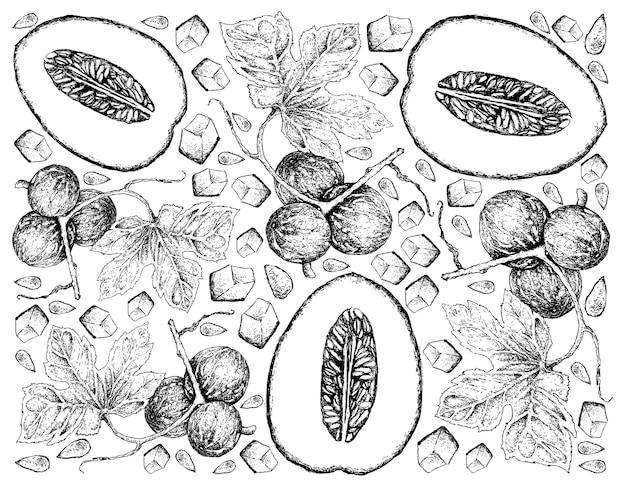 Hand drawn background of honeydew melon and diplocyclos palmatus fruits