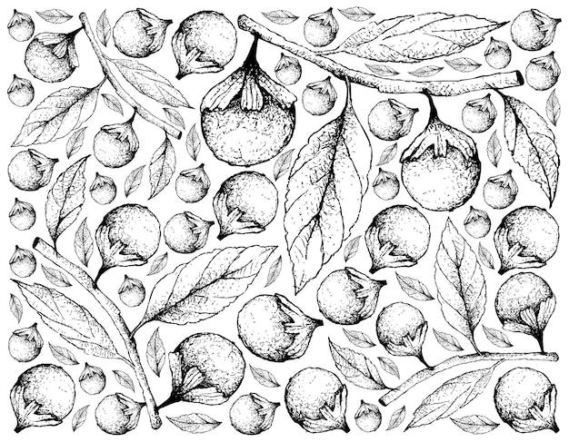 Cordia caffra 과일의 손으로 그린 배경