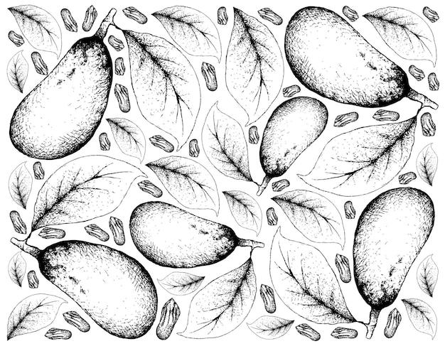 Couepia longipendula 과일의 손으로 그린 배경