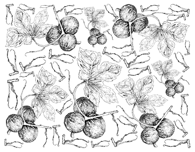 Ручной обращается фон из фруктов diplocyclos palmatus