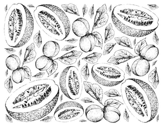 유럽 자두와 chiverre 과일의 손으로 그린 배경