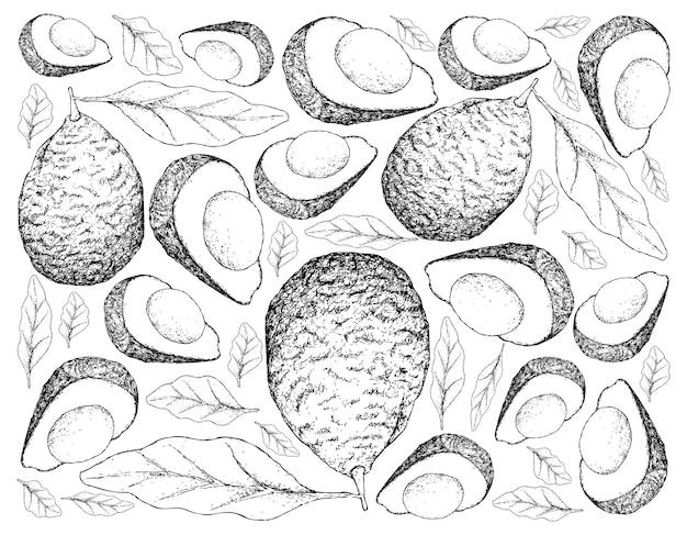 신선한 녹색 아보카도의 손으로 그린 배경