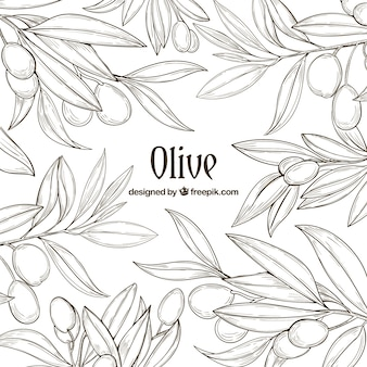 Hand-drawn background of olive branches