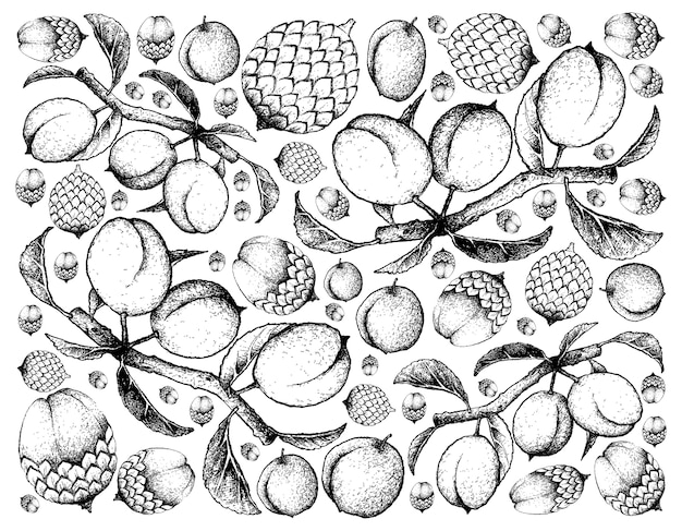 Hand drawn background of rattan fruits and chinese plums