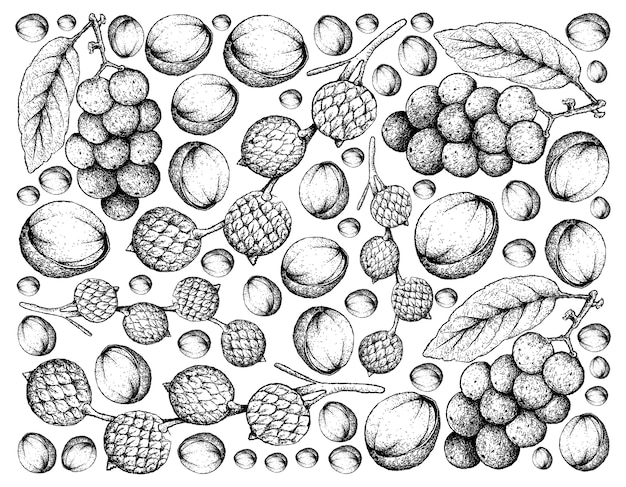 Hand drawn background of rattan and langsat fruits