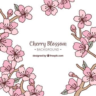 Hand drawn background with sakura