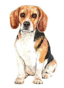 Hand drawn beagle watercolor dog.