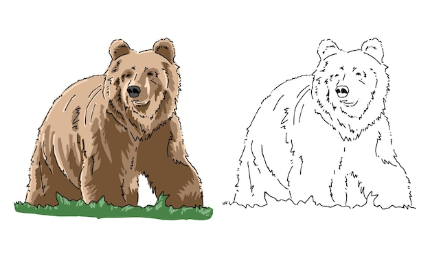 Hand drawn bear coloring page for kid