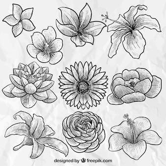 手描き美しい花