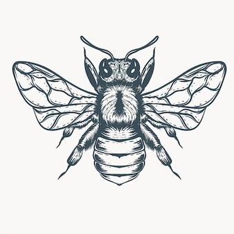 손으로 그린 꿀벌 일러스트