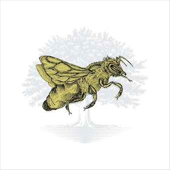 Hand drawn bee illustration