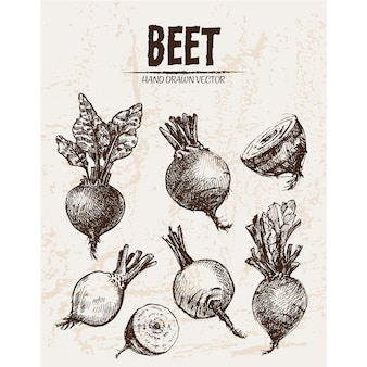 Hand drawn beet collection