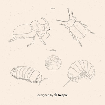 Hand drawn beetle sketches collection
