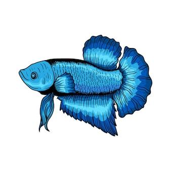 Hand drawn betta fish hand drawn premium vector