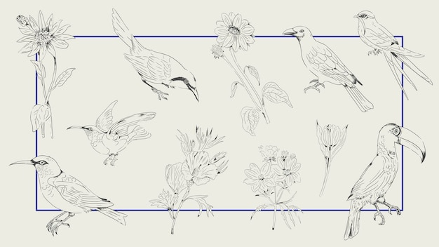 Hand drawn bird and flower collection on a frame background vector