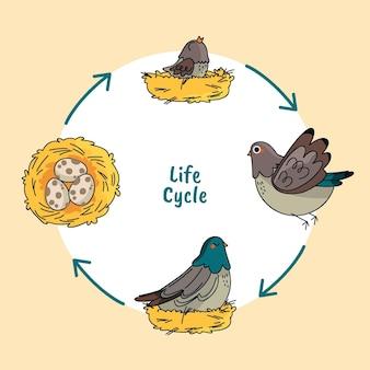 Ручной обращается жизненный цикл птицы
