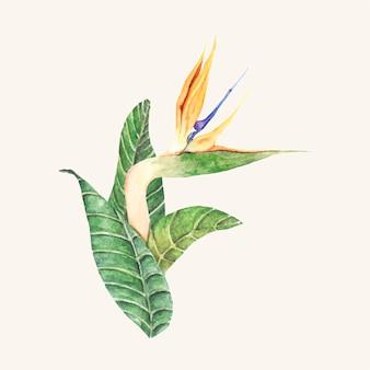 Hand drawn bird of paradise flower isolated