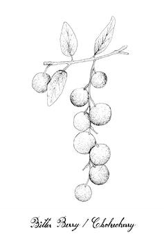 Hand drawn of bitter berries or chokecherries
