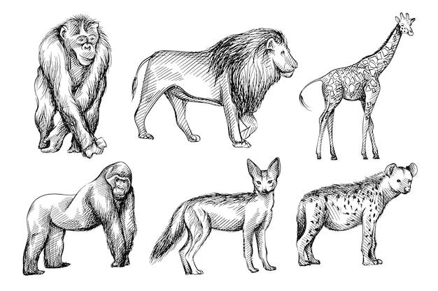 アフリカからの野生動物の手描きの黒と白のスケッチセット。