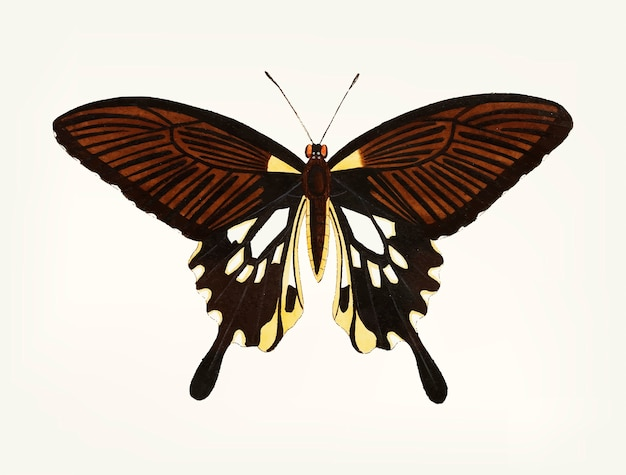 Hand drawn of black butterfly with tailed wings
