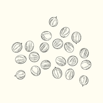 Hand drawn black pepper isolated on white background. sketch handful of black peppercorn