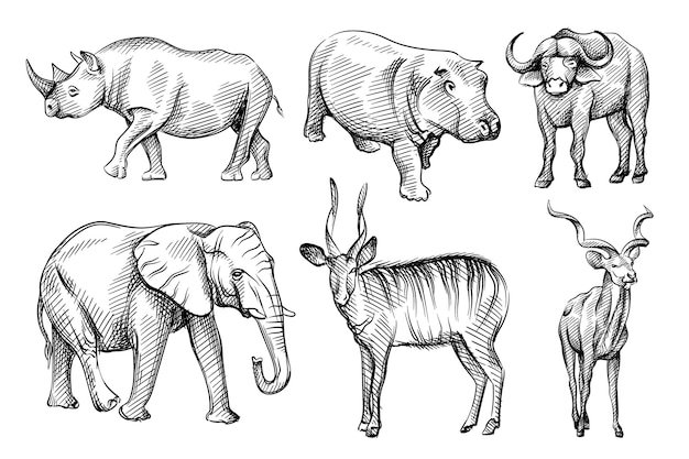 Hand-drawn black and white sketch set of wild animals from africa.
