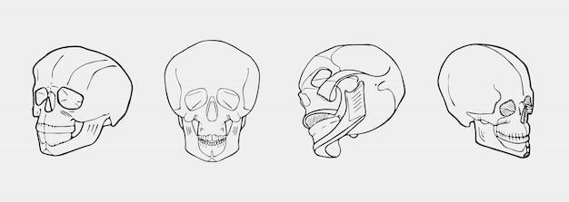 Hand drawn black and white skulls set