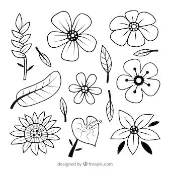 Insieme di fiori tropicali bianco e nero disegnato a mano