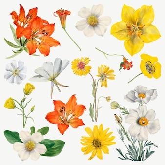 メアリー ヴォー ウォルコットのアートワークからリミックスされた、花が咲く手描きのイラスト セット
