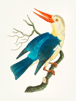 Hand drawn of blue-green kingfisher